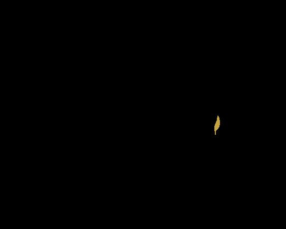 infusions tisanes marque eight powers -illustration produits naturels et biologiques - C'est pas le bien-faire que se crée le bien-être