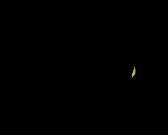 infusions tisanes marque eight powers -illustration produits naturels et biologiques - un assortiment de produits bio et naturels